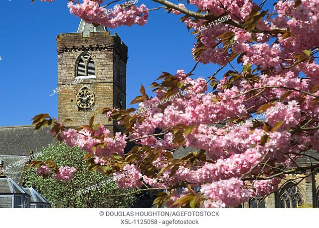 Dunblane cathedral DUNBLANE STIRLINGSHIRE Church clock tower springtime cherry blossom tree branches