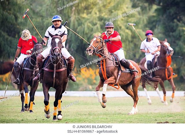Polo Pony. Players in a polo match. Jaipur, India