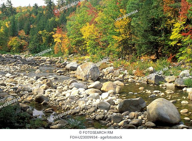 ME, Maine, White Mountain National Forest, Colorful fall foliage along Evans Brook in the White Mountain Nat'l Forest in autumn