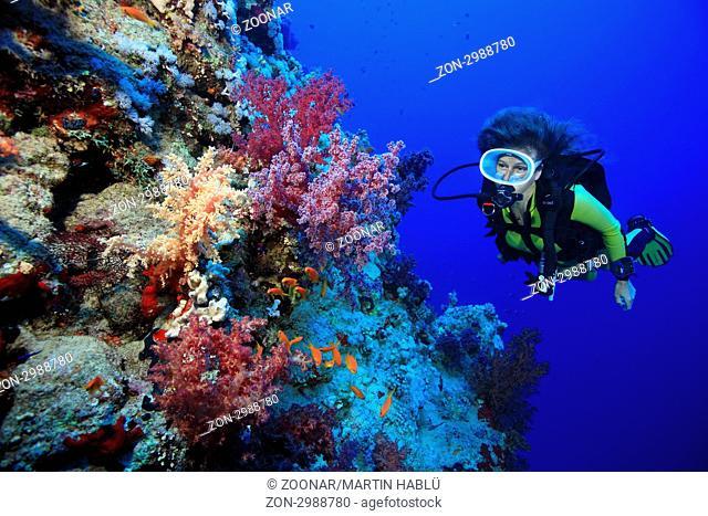 Taucherin mit Weichkorallen bei Ras Nasrani, Sharm el Sheikh, Ägypten, Rotes Meer, Scuba diver and beautyful corals, Sharm el Sheikh, Aegypt, Red Sea
