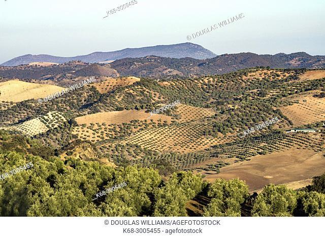 Farm land near Olvera, Cadiz province, Andalucia, Spain