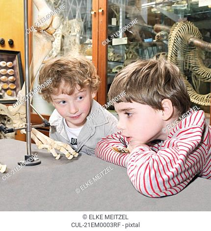 Boys looking at artifact in museum