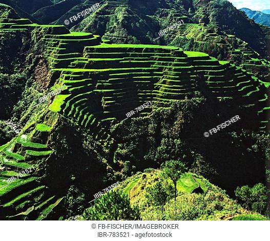 Rice terraces, Banaue, Ifugao Province, Luzon, Philippines