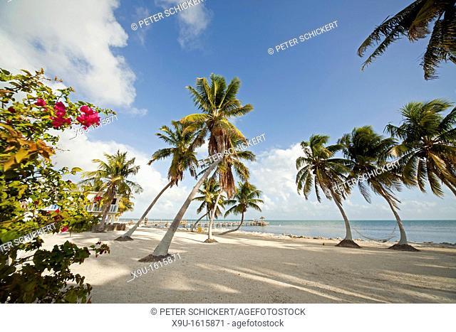 coconut trees at the coast in Marathon, Florida Keys, Florida, USA