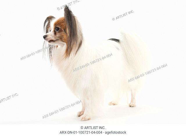 A dog looking left