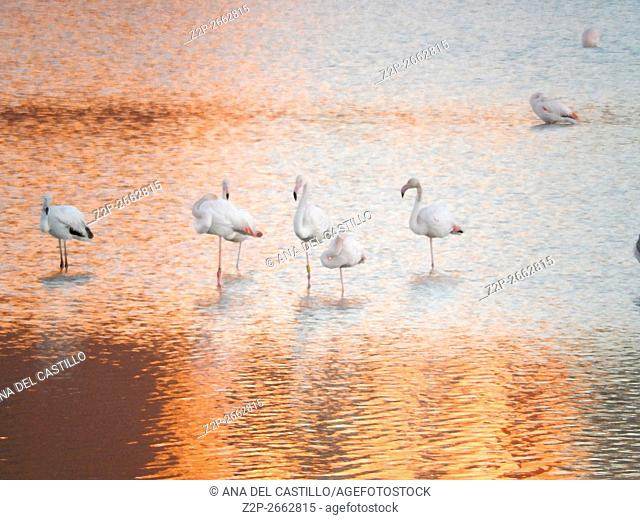 Flamingos on the salt works Calpe Spain