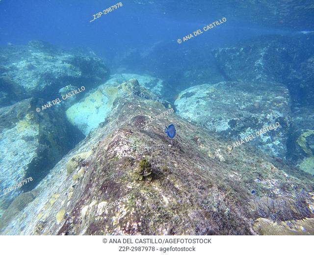 Reef Underwater Caribbean sea Les Trois-Ilets Martinique French Antilles