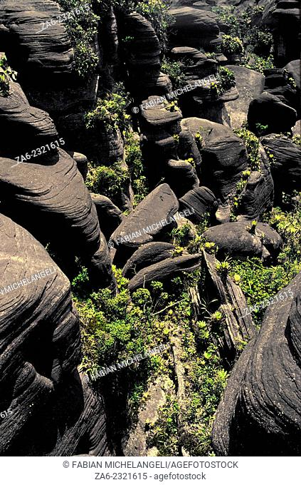 Jagged surface of the summit of Aparaman-tepuy with towers and blocks covered with hanging gardens of endemic plants. Canaima National Park