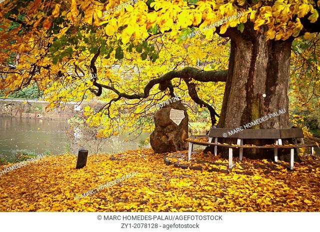 Autumn scene in Hannover Münden Germany