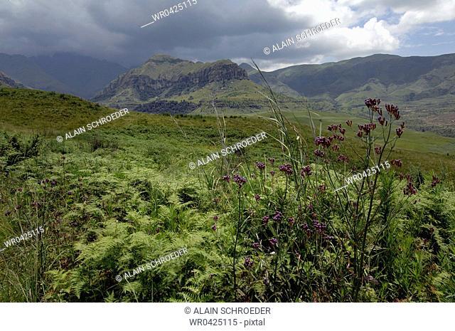 Clouds over a landscape, Cathedral Peak, North Drakensberg, Kwazulu-Natal, South Africa