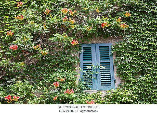 europe, italy, tuscany, sticciano, house with ivy