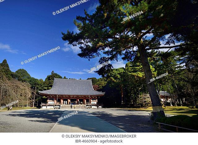 Pine tree (Pinus) in front of Kondo hall of Shimo-Daigo part of Daigoji temple complex, Fushimi-ku, Kyoto, Japan
