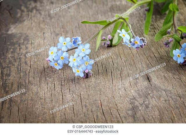 forget-me-nots on wooden table