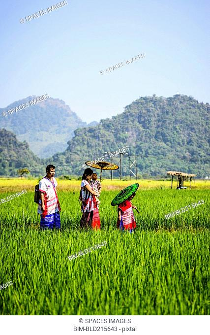 Asian family walking under parasols in rural field