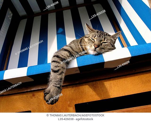 Lazy cat lying in beach chair