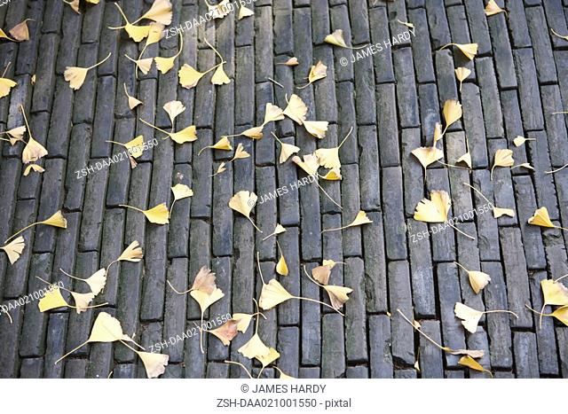 Ginkgo leaves on stone surface