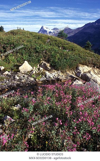 near Mt. Alexandra and Whiterose Mountain., Banff, Alberta, Canada
