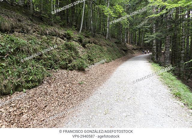 Friends doing trekking in Forest in the Seva de Irati in Navarra, Spain
