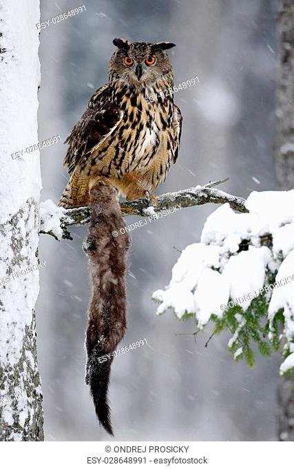 Big Eurasian Eagle Owl sitting on snowy tree trunk with snow