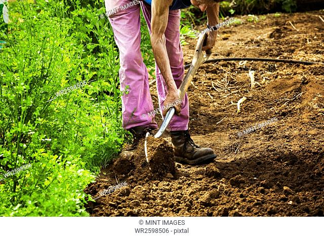 A woman using a shovel in a small field