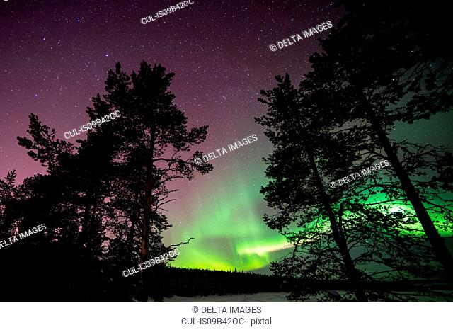 Northern lights over Lapland forest, Jukkasjarvi, Sweden