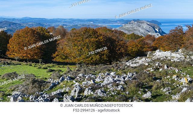 View of Mount Candina from Mount Cerredo, Beech forest in autumn at Cerredo Mountain, Cantabrian Sea, MONTAÑA ORIENTAL COSTERA MOC, Castro Urdiales, Cantabria
