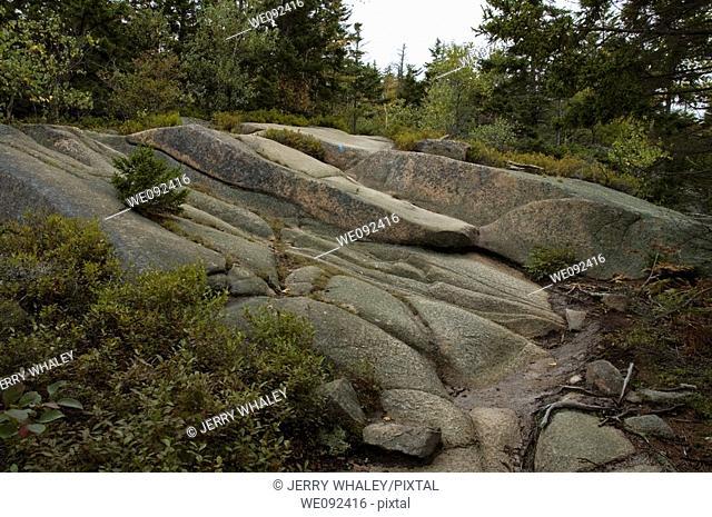 Gorham Mountain Trail, Acadia Nat Park, ME