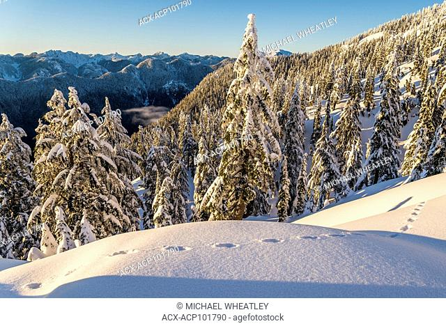Rabbit tracks in the snow, Mount Seymour Provincial Park, North Vancouver, British Columbia, Canada