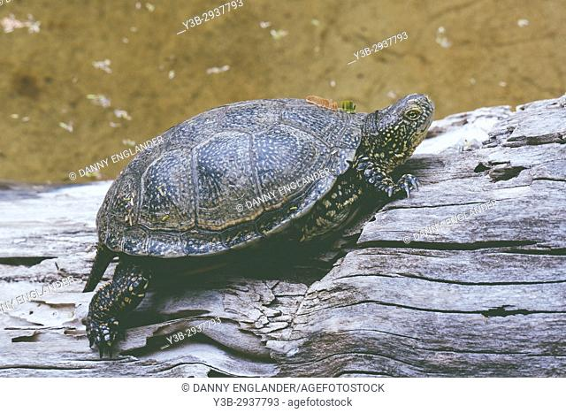 A Turtle sits on a log outside the water