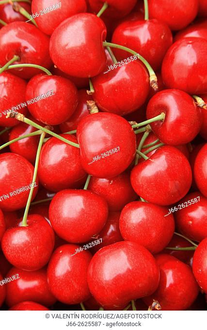 Cherries in the region Alto Palancia. Castellón