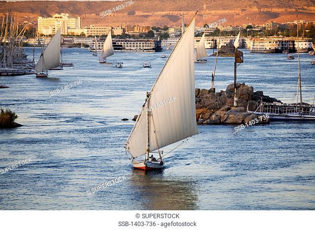 Egypt, Aswan, Feluccas sail on Nile River