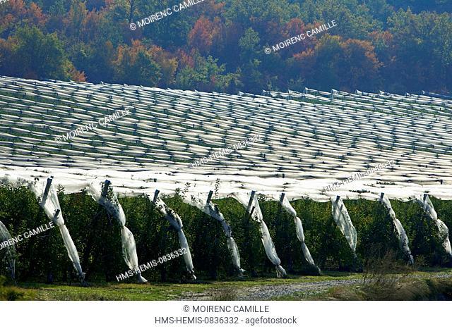 France, Alpes de Haute Provence, L'Escale, fruit trees apple trees