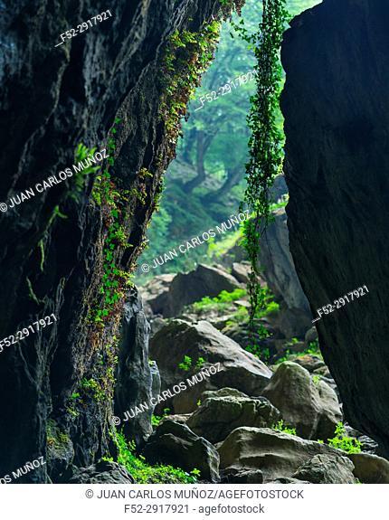 The Cubilla Cave in Castro Urdiales, MOC Montaña Oriental Costera, NATURA 2000, Cantabria, Spain, Europe