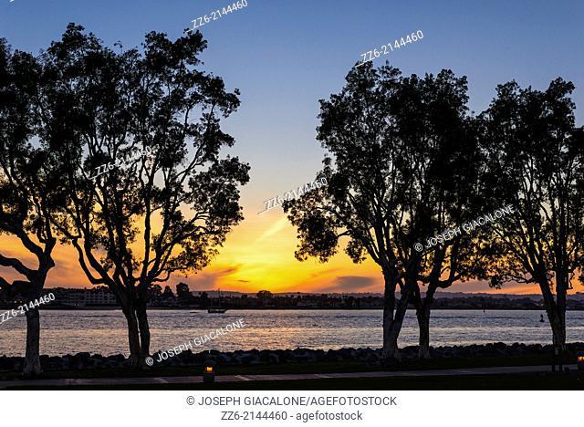 Embarcadero Marina Park trees during sunset. San Diego, California, United States