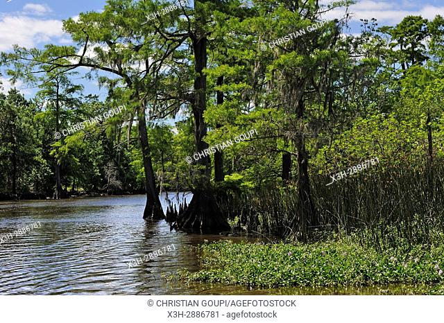 cypress-lined backwater channel of Neches River, Beaumont, Texas, United States of America, North America