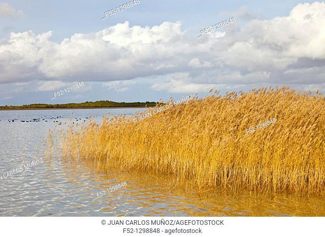 Laguna grande, Villafranca de los Caballeros, Toledo province, Castilla La Mancha, Spain