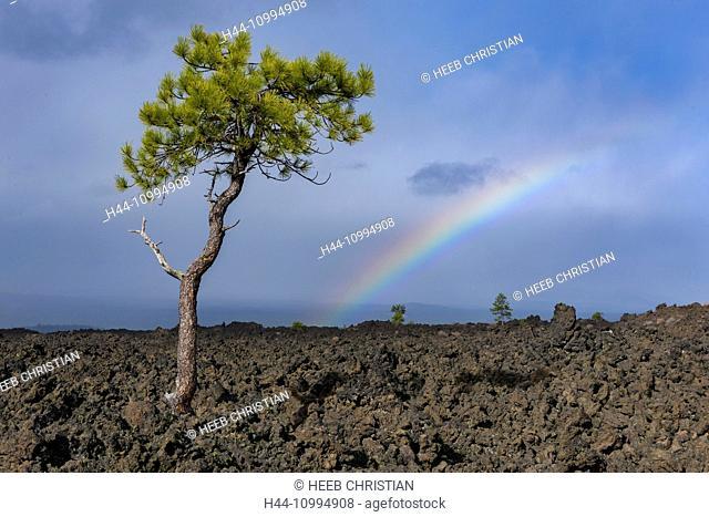USA, Oregon, Deschutes County, Bend, Newberry National Volcanic Monument, Deschutes National Forest, Lava Butte