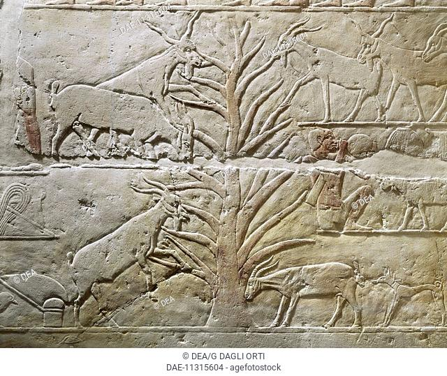 Egyptian civilization, Old Kingdom. Relief depicting goats grazing a sycamore tree. From the Mastaba of Akhatep, Saqqara.  Paris, Musée Du Louvre