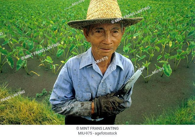 Taro farmer, Kauai, Hawaii