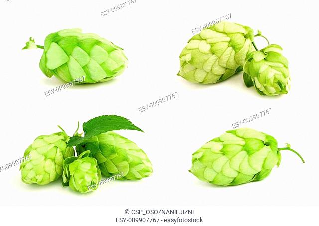 The collage fresh green hop