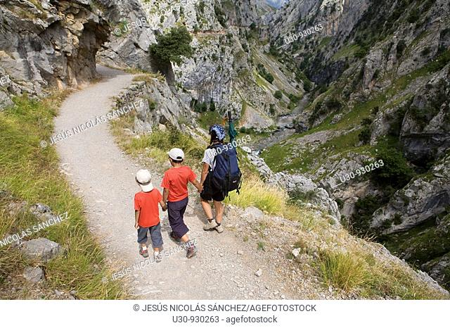 Family of hikers walking along the route of the Cares Canyon, in the Picos de Europa National Park, between the Urrieles and Ándara massifs, Poncebos, Cantabria