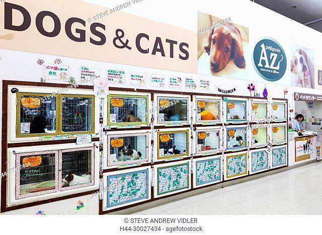 Japan, Hoshu, Yamanashi Prefecture, Kobuchizawa, Supermarket Display of Dogs
