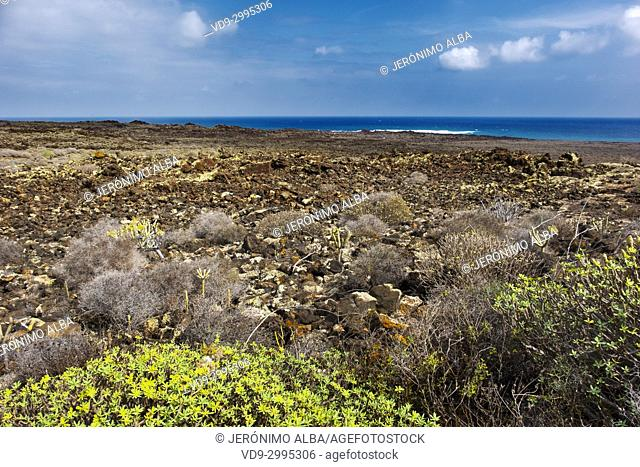 Volcanic landscape and vegetation, Haria. Lanzarote Island. Canary Islands Spain. Europe