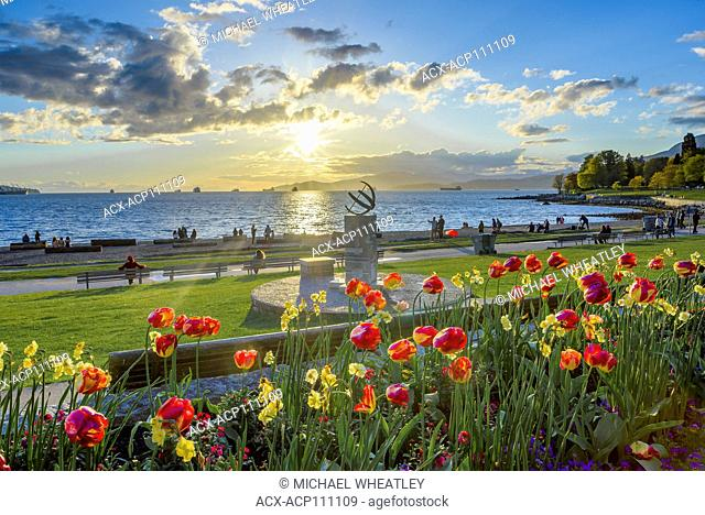 Tulips at sunset, English Bay, Vancouver, British Columbia, Canada