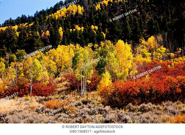Fall colors along the Million Dollar Highway in Colorado