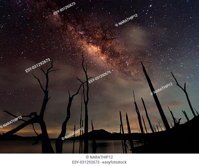The milky way and the dead tree