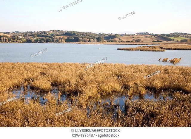 montepulciano lake, siena province, tuscany, italy, europe