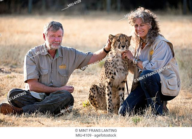 Animal conservationists with cheetah, Acinonyx jubatus, Cheetah Conservation Fund, Namibia
