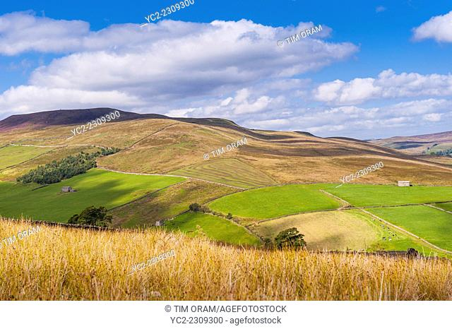 Swaledale in the Yorkshire Dales in Yorkshire , England , Britain , Uk