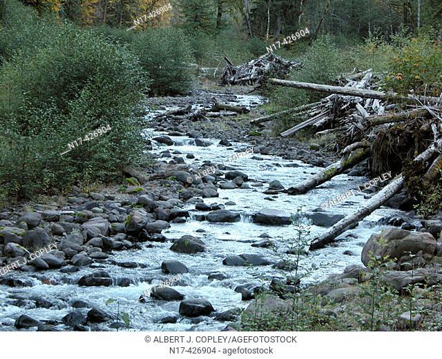 Mountain stream. Oregon, USA